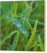 Water Drops On The  Grass 0019 Wood Print