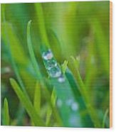 Water Drops On The  Grass 0021 Wood Print