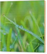Water Drops On The  Grass 0026 Wood Print