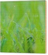 Water Drops On The  Grass 0027 Wood Print