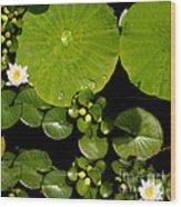 Water Drops Bristol Rhode Island Wood Print