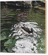 Water Duck Wood Print