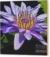 Water Flower Wood Print by Nick Zelinsky