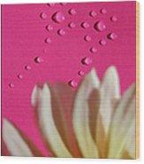 Water Flowers Wood Print by Kip Krause