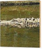 Water Gator Wood Print