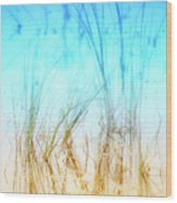 Water Grass - Outer Banks Wood Print