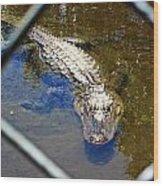 Water Hole Gator Wood Print