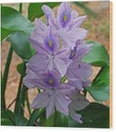Water Hyacinth Wood Print