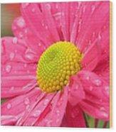 Water Kissed Pink Chrysanthemum 2 Wood Print