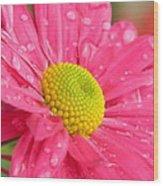 Water Kissed Pink Chrysanthemum  Wood Print