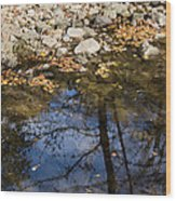 Water Leaves Stones And Branches Wood Print