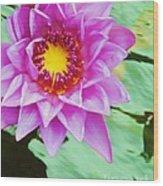 Water Lilies 003 Wood Print
