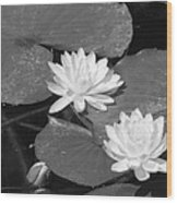 Water Lilies And Bud Wood Print
