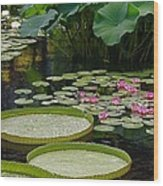 Water Lilies And Platters And Lotus Leaves Wood Print