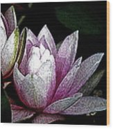 Water Lilies I Wood Print
