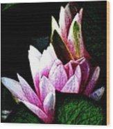 Water Lilies IIi Wood Print