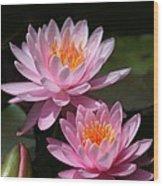 Water Lilies Love The Sun Wood Print by Sabrina L Ryan