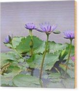 Water Lilies Of Vietnam Wood Print