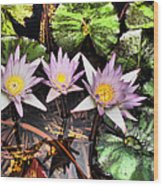 Water Lilies Water Drop And Reflection In Water Wood Print