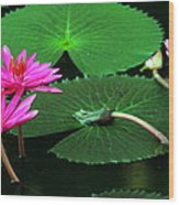 Water Lillies In Pink Wood Print