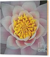 Water Lillies Macro Wood Print