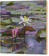 Water Lillies9 Wood Print