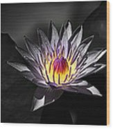 Water Lilly In Hdr Wood Print