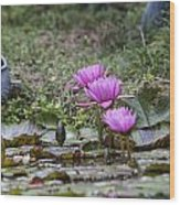 Water Lilly Trio Wood Print