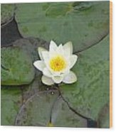 Water Lily - White Wood Print