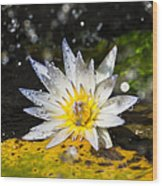 Water Lily 1 Wood Print