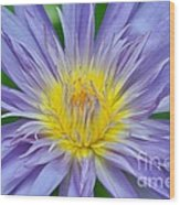 Water Lily 16 Wood Print