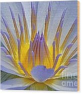 Water Lily 18 Wood Print