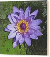Water Lily 2013 Wood Print