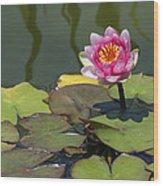 Water Lily 3 Wood Print