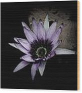 Water Lily 4 Wood Print