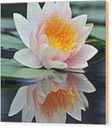 water lily 45 Water Lily with Reflection Wood Print