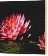 Water Lily 5 Wood Print by Julie Palencia