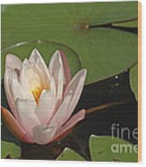 Water Lily 5 Wood Print