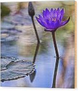 Water Lily 6 Wood Print