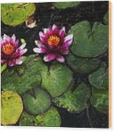 Water Lily Acanthius Wood Print