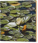 Water Lily And Bees Wood Print