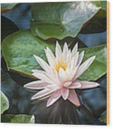 Water Lily And Lily Pads Wood Print