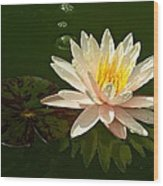 Water Lily And Pad Wood Print