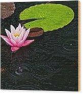 Water Lily And Raindrops Wood Print