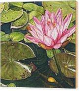 Water Lily At The Biltmore Gardens Wood Print