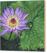 Water Lily At The Conservatory Of Flowers Wood Print