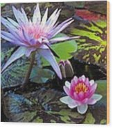 Water-lily Wood Print