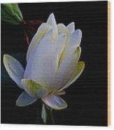 Water Lily Blossom In Shadows Wood Print