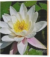 Water Lily Blossom Wood Print