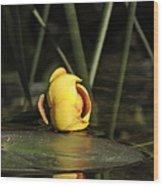 Water Lily Bud Wood Print